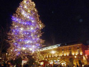 resized_arbol-de-navidad-en-estrasburgo