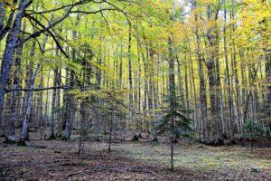 resized_bosque-de-hayas